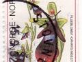 Norveška - Ophrys insectifera