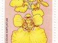 Barbados - Oncidium ampliatum