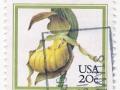 ZDA - Cypripedium calceolus