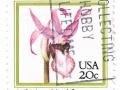 ZDA - Calypso bulbosa