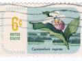 ZDA - Cypripedium reginae