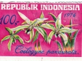 Indonezija - Coelogyne pandurata