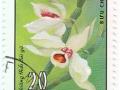 Viet Nam - Dendrobium tortile