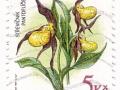 Češka - Cypripedium calceolus