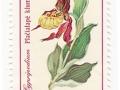 Litva - Cypripedium calceolus