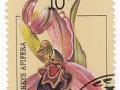 Sovjetska zveza - Ophrys apifera
