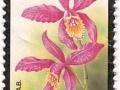 Belgija - Cattleya harrisoniana