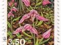 Danska - Cephalanthera rubra