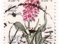 Danska - Dactylorhiza sp.