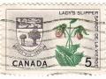 Kanada - Cypripedium calceolous