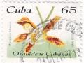 Kuba - Macradenia lutescens