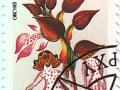 Madžarska - Orchis purpurea