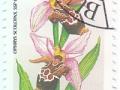 Madžarska - Ophrys scolopax