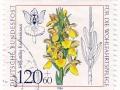 Nemčija - Dactylorhiza sambucina
