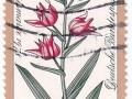 Nemčija - Cephalanthera rubra