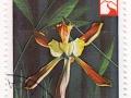 Nikaragva - Epidendrum alatum