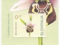 Slovenija - Ophrys holosericea