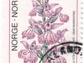 Norveška - Dactylorhiza fuchsii