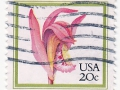 ZDA - Arethusa bulbosa