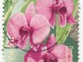 Australia - Dendrobium phalaenopsis