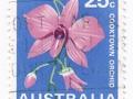 Australia - Vappodes phalaenopsis