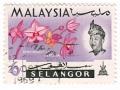 Malezija - Spathoglottis plicata