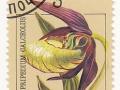 Sovjetska zveza - Cypripedium calceolus