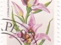 Madžarska - Cephalanthera rubra