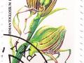 Madžarska - Himantoglossum hirnicum