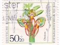 Nemčija - Orchis anthropophora