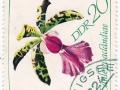 Nemčija (NDR) - Cattleya aclandiae