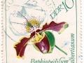 Nemčija (NDR) - Paphiopedilum Albertianum
