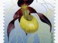 Slovenija - Cypripedium calceolus