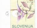 Slovenija - Epipactis palustris