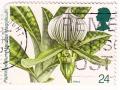 Velika Britanija - Paphiopedilum Maudiae 'Magnificum'