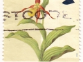 Velika Britanija - Cypripedium calceolus