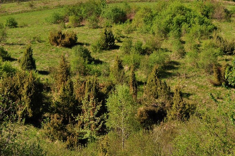 Zaraščanje travnikov v okolici Žuničev.